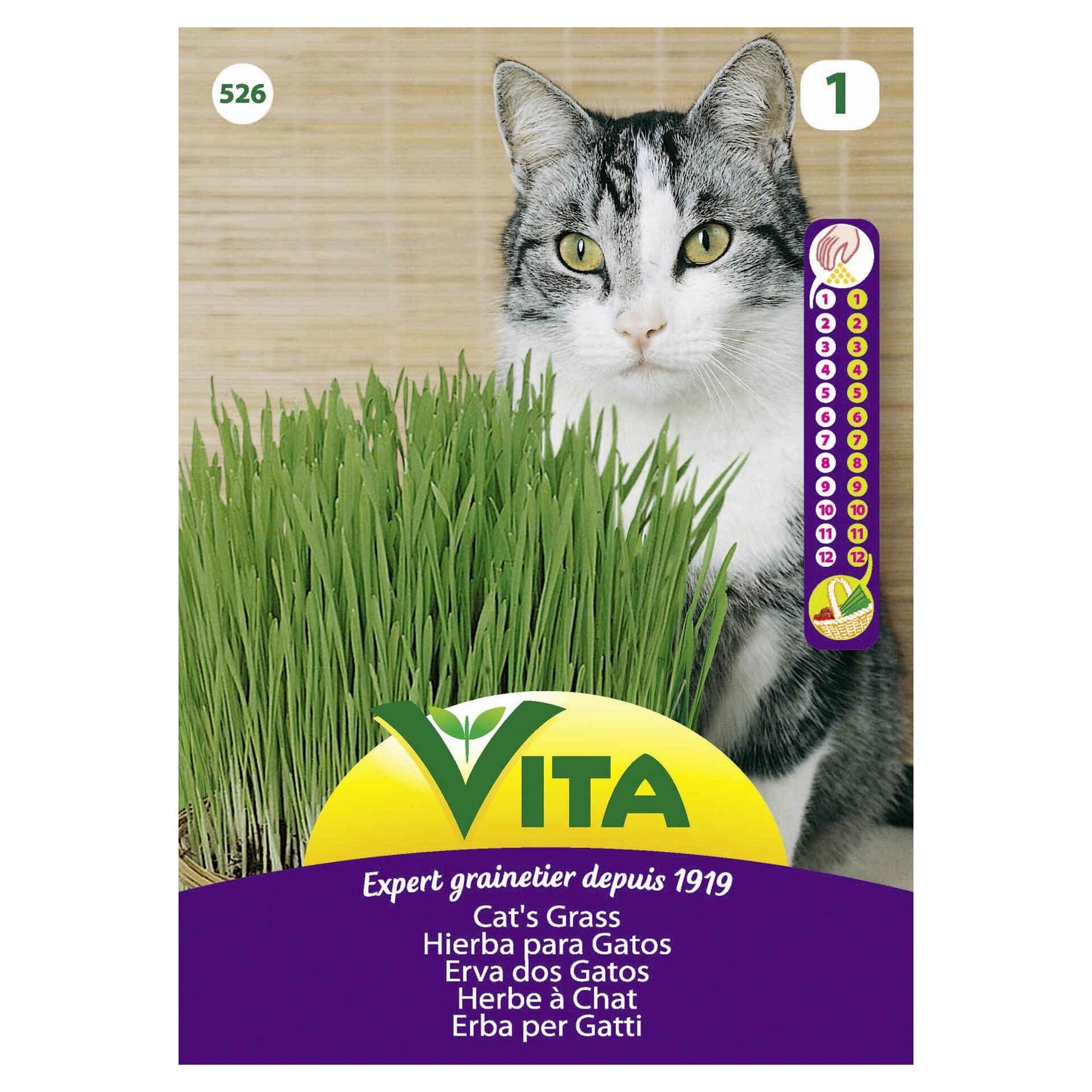 Sementes Erva Aromática para Gatos