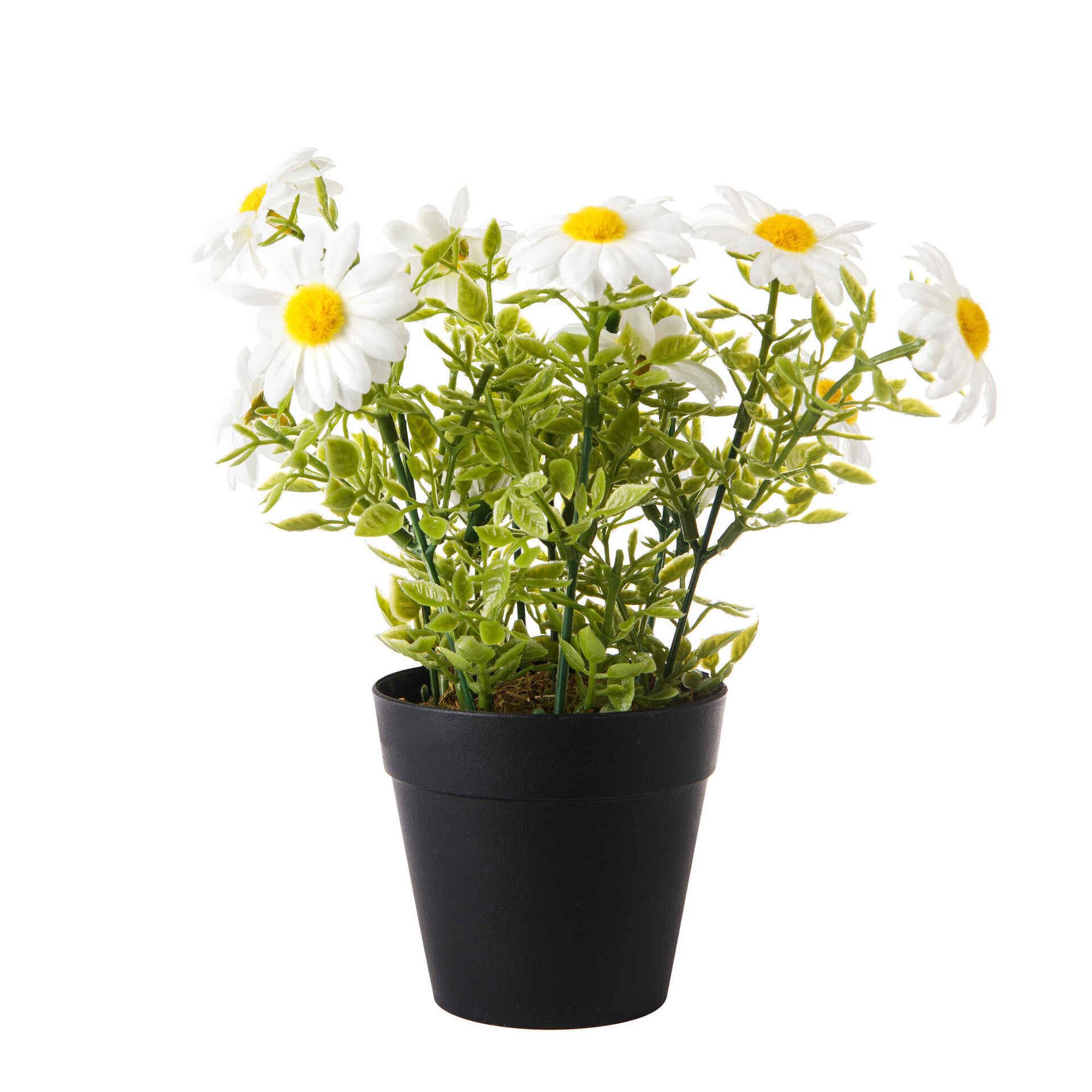 Planta Artificial Malmequeres com Vaso Preto