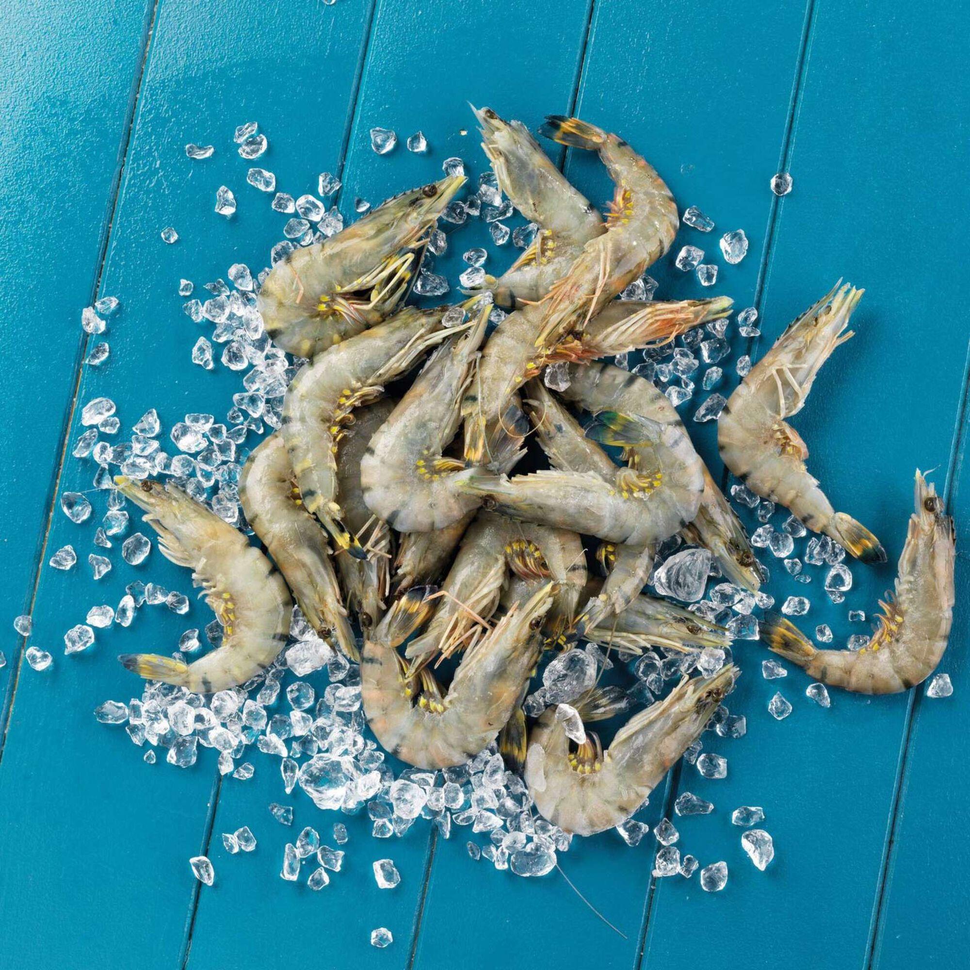 Camarão Black Tiger Aquacultura 20/30 Congelado