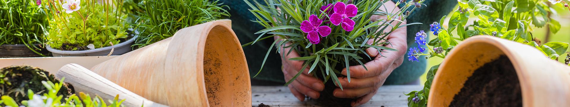 Vasos, Sementes e Tratamento