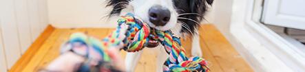 Casotas, Acessórios e Brinquedos de Cão