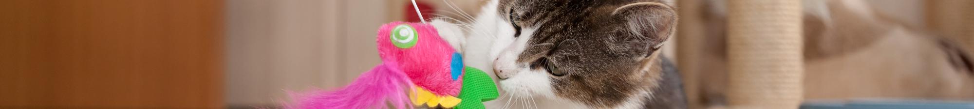 Camas, Brinquedos e Acessórios de Gato